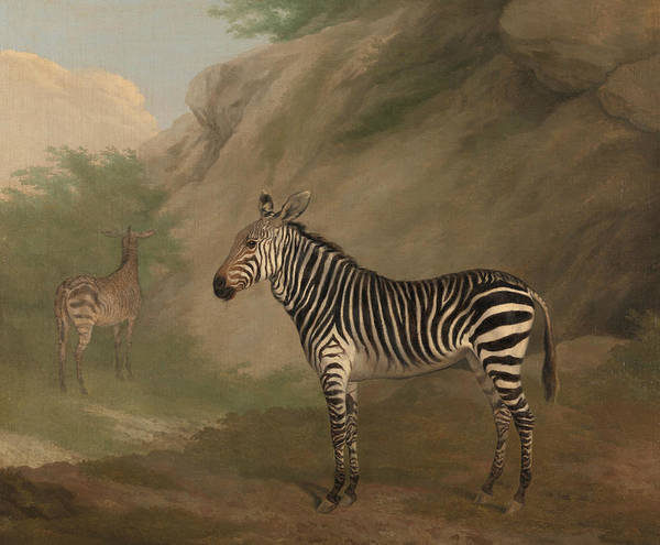 Painting - Zebra by Jacques-Laurent Agasse