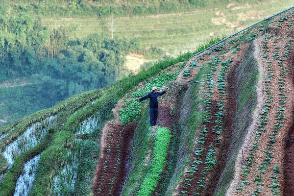 Rice Photograph - Sapa - Vietnam by Joana Kruse