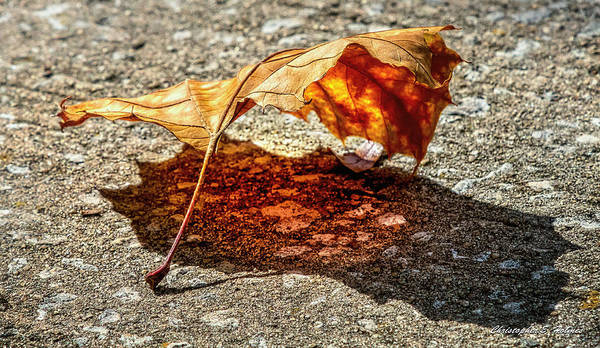 Photograph - Leaf Under Glow by Christopher Holmes