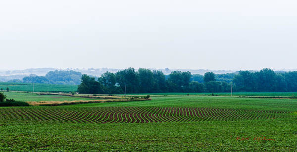 Photograph - 2015 Iowa Bean Field by Edward Peterson