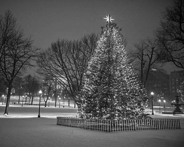 Photograph - 2016 Boston Common Christmas Tree Boston Ma Snowstorm Black And White by Toby McGuire