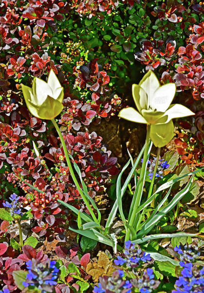 Photograph - 2016 Early May Side Garden Delight by Janis Nussbaum Senungetuk