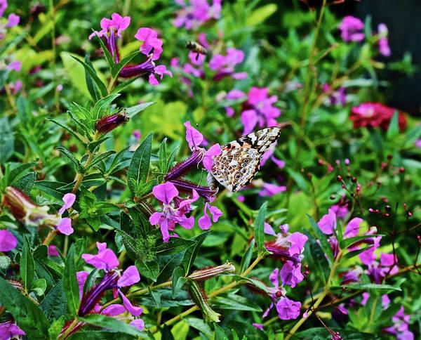 Photograph - 2016 In The Herb Garden by Janis Nussbaum Senungetuk