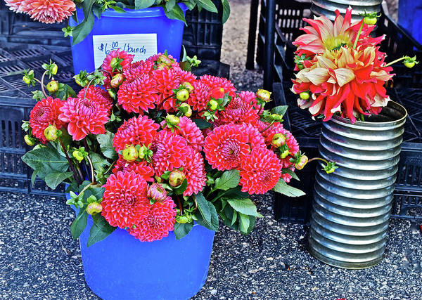 Photograph - 2016 Monona Farmer's Market Blue Bucket Of Dahlias by Janis Nussbaum Senungetuk