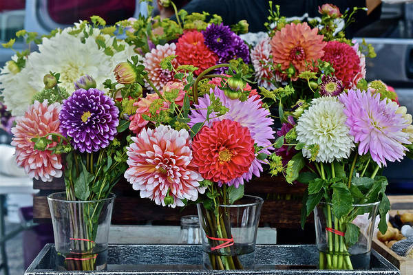 Photograph - 2016 Monona Farmers' Market Dahlias Bouquets by Janis Nussbaum Senungetuk