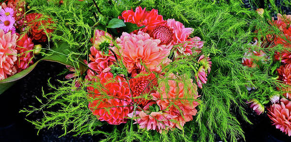 Photograph - 2016 Monona Farmers' Market Early October Dahlias by Janis Nussbaum Senungetuk