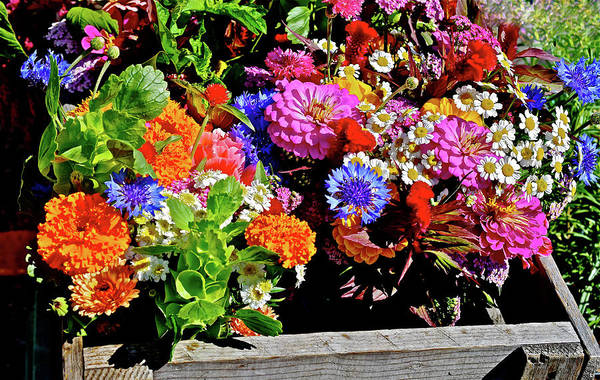 Photograph - 2016 Monona Farmers' Market July Flower Plants by Janis Nussbaum Senungetuk