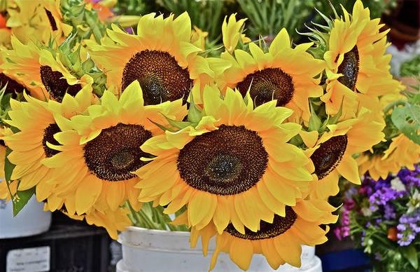 Photograph - 2016 Monona Farmers' Market Sunflowers 1 by Janis Nussbaum Senungetuk