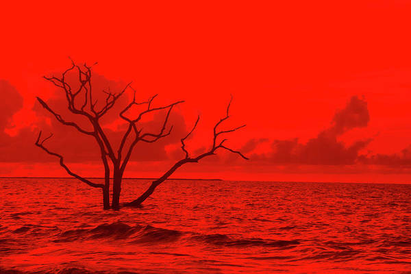 Photograph - 2016 Red Tree Bone Yard by Randy J Heath