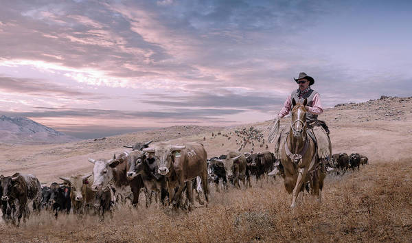 Photograph - 2016 Reno Cattle Drive by Rick Mosher
