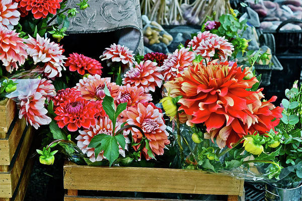 Photograph - 2017 Monona Farmers' Market Dahlias And Vegetables by Janis Nussbaum Senungetuk