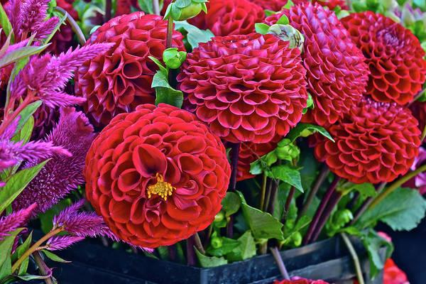 Photograph - 2017 Monona Farmers' Market September Blossoms by Janis Nussbaum Senungetuk