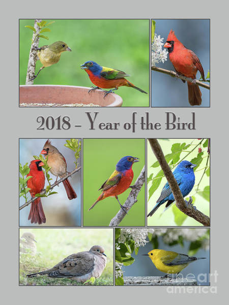 Wall Art - Photograph - 2018 Year Of The Bird by Bonnie Barry