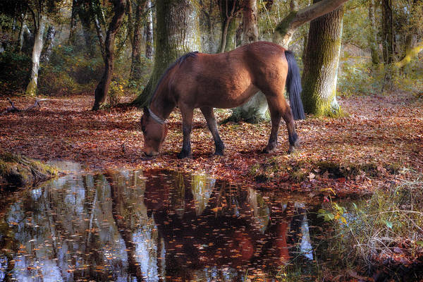 Pferd Photograph - New Forest - England by Joana Kruse