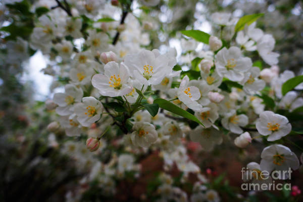 Wall Art - Painting - Spring Landscape by Celestial Images