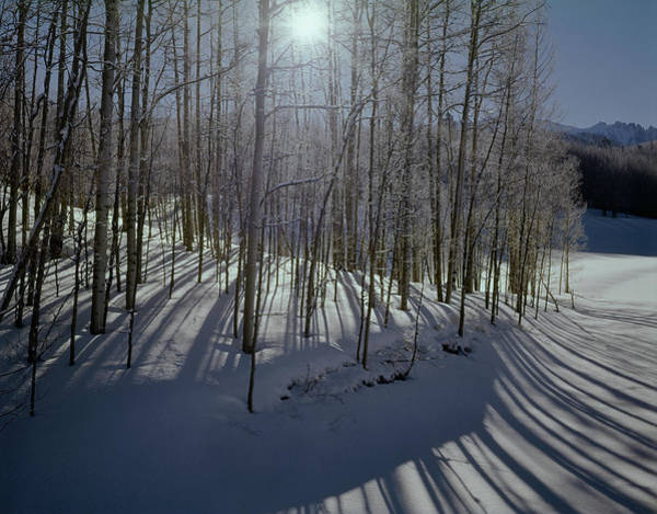 Photograph - 210609 Aspens In Winter With Sunburst by Ed Cooper Photography