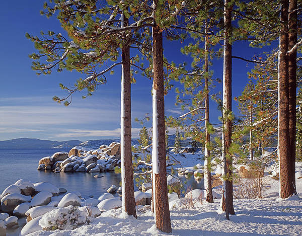 Photograph - 211257 Snow On Tree Sides Lake Tahoe by Ed Cooper Photography
