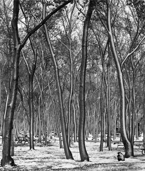 Photograph - 213353-bw-trees In Canyon De Chelly by Ed Cooper Photography