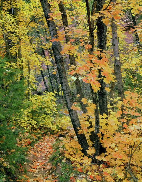 Photograph - 213535 Fall Colors In Oak Creek Canyon by Ed Cooper Photography