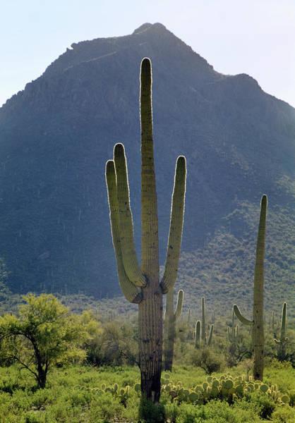 Photograph - 213858 Saguaro Cactus And Peak Az by Ed Cooper Photography