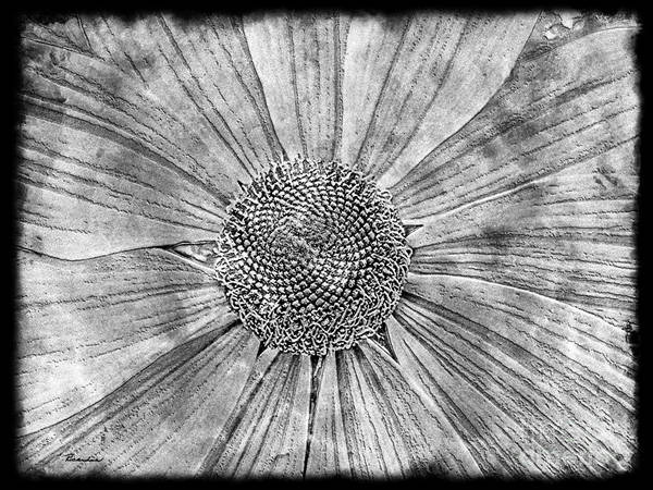 Photograph - 21a Abstract Floral Digital Art by Ricardos Creations