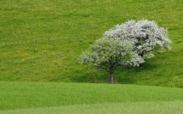 Super Sport Wall Art - Digital Art - Tree by Super Lovely