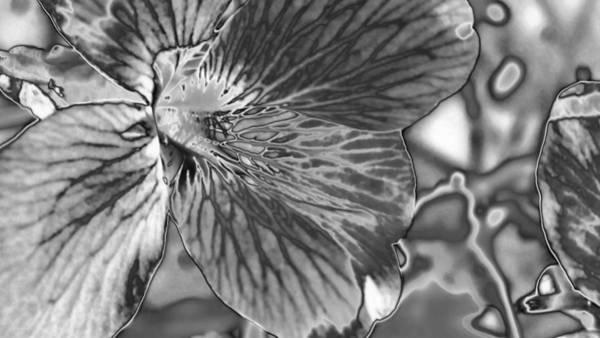 Digital Art - Abstract  by Belinda Cox