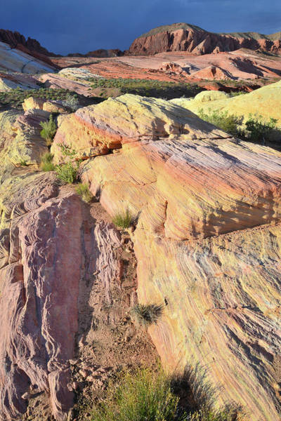Photograph - Multicolored Sandstone In Valley Of Fire by Ray Mathis
