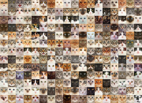 Photograph - 234 Random Cats by Warren Photographic