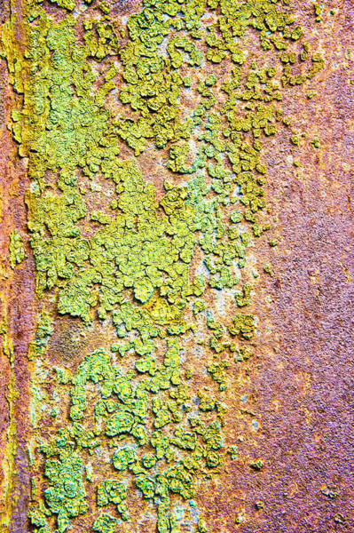Corrosion Photograph - Peeling Paint by Tom Gowanlock