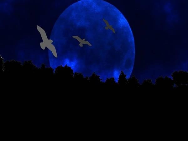 Night Digital Art - Landscape by Super Lovely