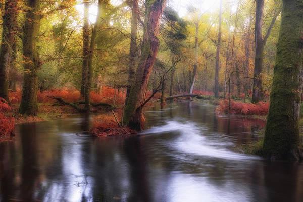 Wald Wall Art - Photograph - New Forest - England by Joana Kruse