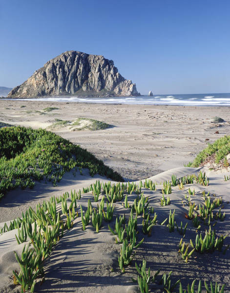 Photograph - 2a6226 Ice Plant At Morro Rock by Ed Cooper Photography