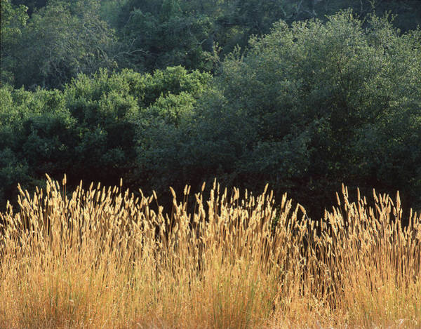 Photograph - 2b6318 Grass And Oak Trees On Sonoma Mountain by Ed Cooper Photography