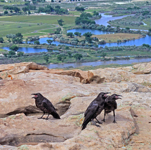 Photograph - 2d10354 American Crows by Ed Cooper Photography