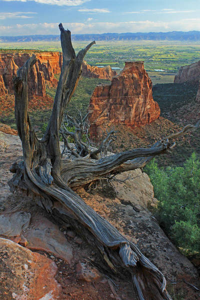 Photograph - 2d10365 Stump And Monument by Ed Cooper Photography