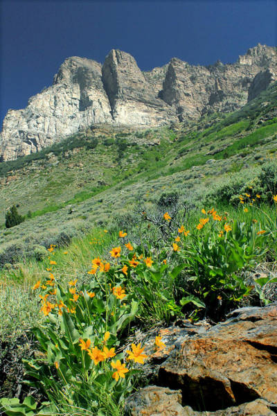 Photograph - 2d11120 Ramparts And Wildflowers by Ed Cooper Photography
