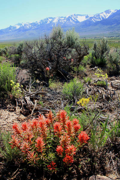 Photograph - 2da5920 Paintbrush And Steens Mountain by Ed Cooper Photography