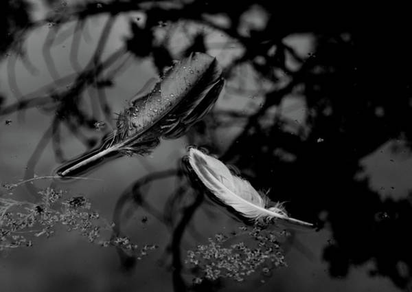 Photograph - On The Surface - Bw by Marilyn Wilson