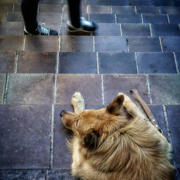 Dogs Wall Art - Photograph - 2feet And 2vak #dog #animal #pet by Rafa Rivas