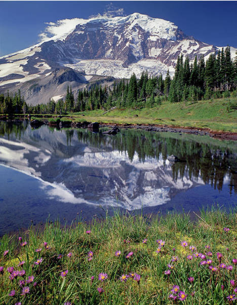 Photograph - 2m4861 Mt. Rainier Reflect And Wildflowers by Ed Cooper Photography