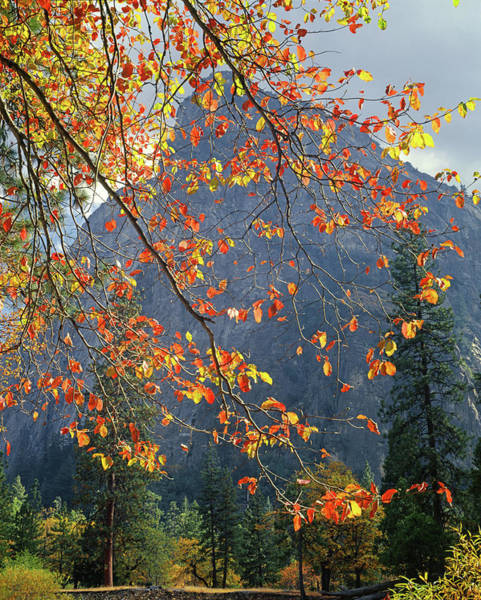 Photograph - 2m6701 Fall Colors In Yosemite by Ed Cooper Photography