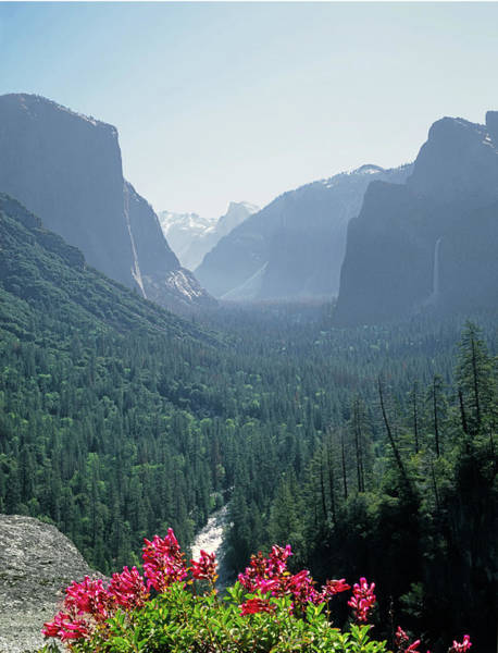 Photograph - 2m6739 Tunnel View With Cliff Penstemon by Ed Cooper Photography