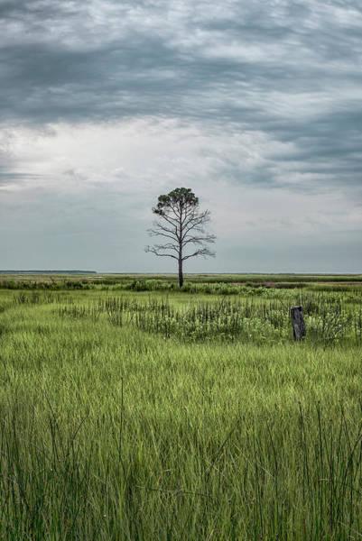 Blackwater Wall Art - Photograph - A Simple Tree by Robert Fawcett