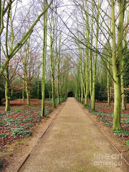 Wall Art - Photograph - A Woodland Path by Tom Gowanlock