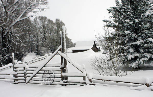 Photograph - After The Snow by Ronnie and Frances Howard