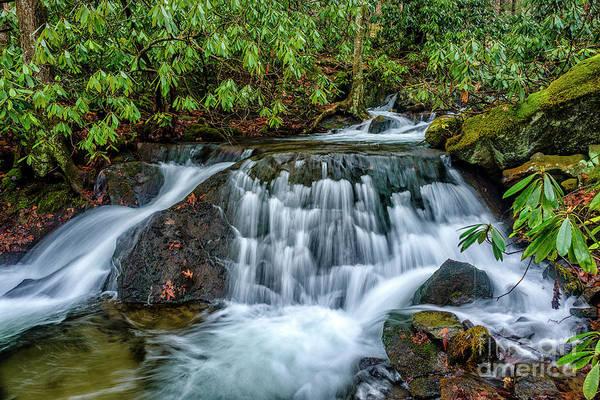 Photograph - Aldrich Branch Monongahela National Forest by Thomas R Fletcher