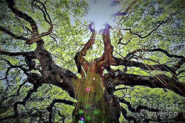 Digital Art - Angel Oak by Stefan Duncan