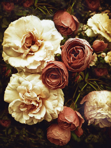 Stem Digital Art - Antique Roses by Jessica Jenney