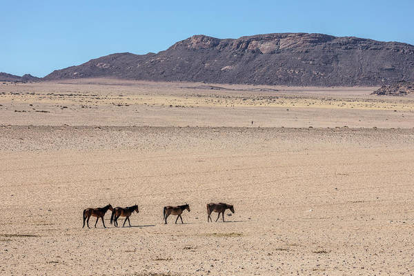 Pferd Photograph - Aus - Namibia by Joana Kruse